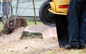 rated Liverpool tree stump removal companies