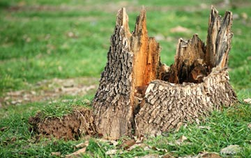 tree stump removal Liverpool, Merseyside