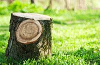 Liverpool tree stump removal services